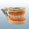 Cover Image for PATCH: DENTAL ASSISTING