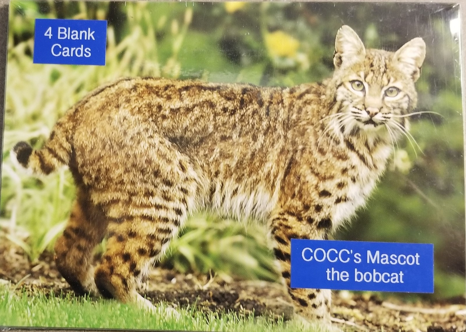 Image For GREETING CARDS BOBCAT 4-PACK